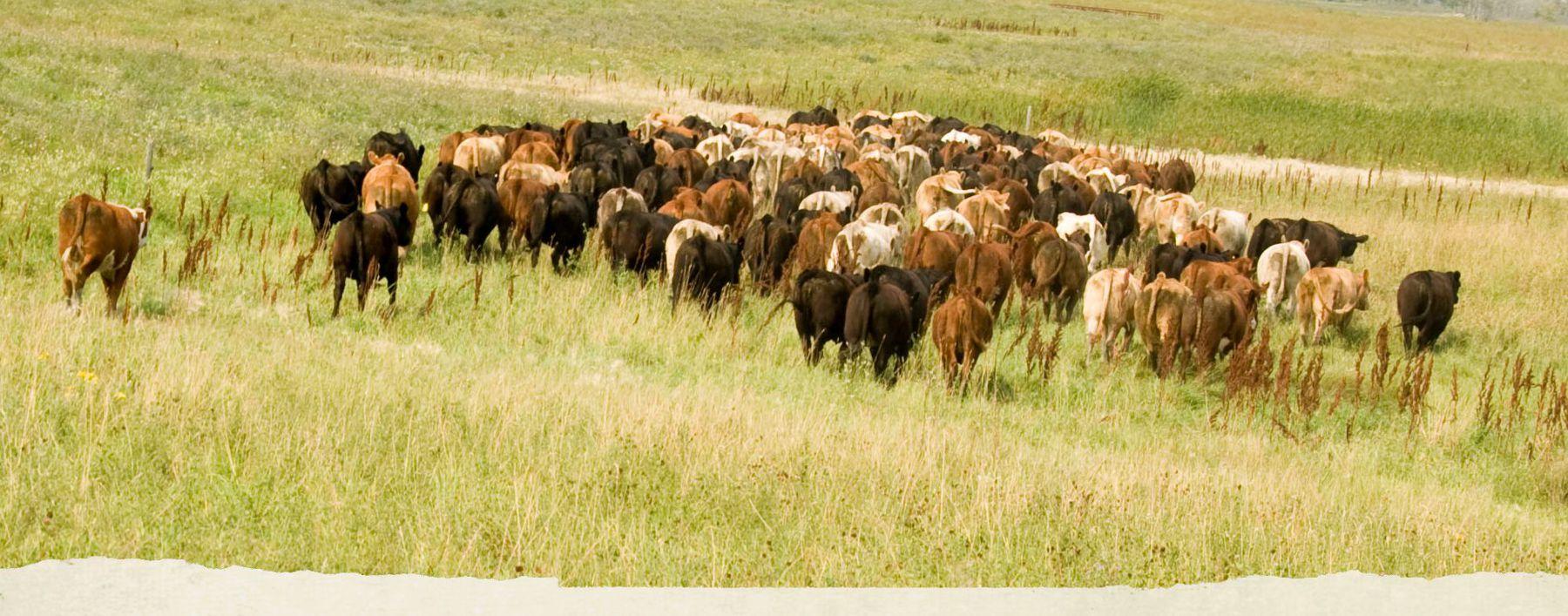 prairie-livestock-banner1