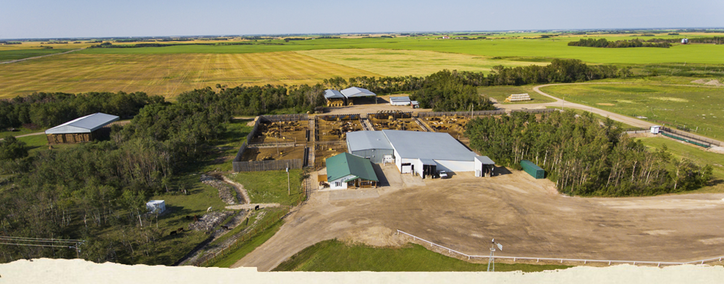 prairie-livestock-banner-10